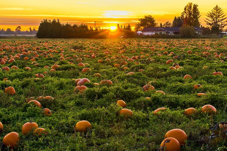 halloween-pumpkins-candy